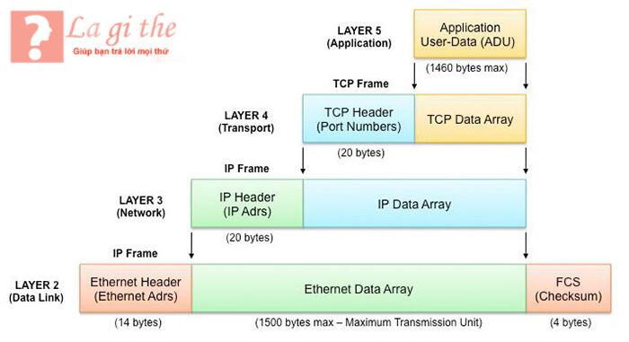 Nhận định về IP