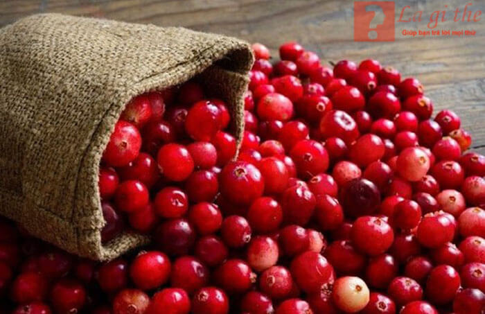 Cranberry là quả gì?