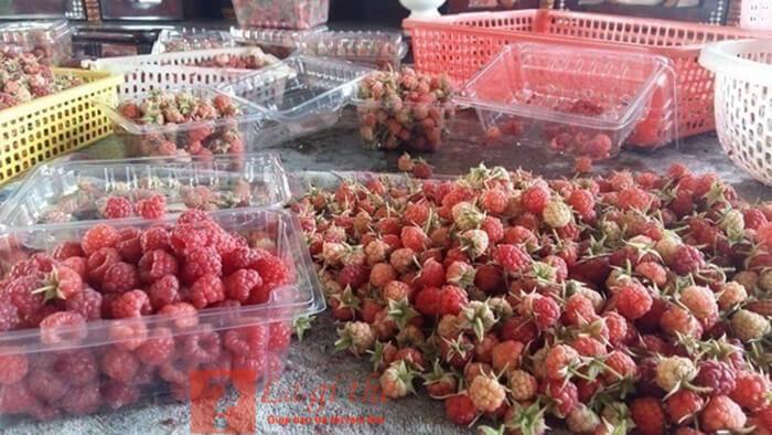 raspberry để khô