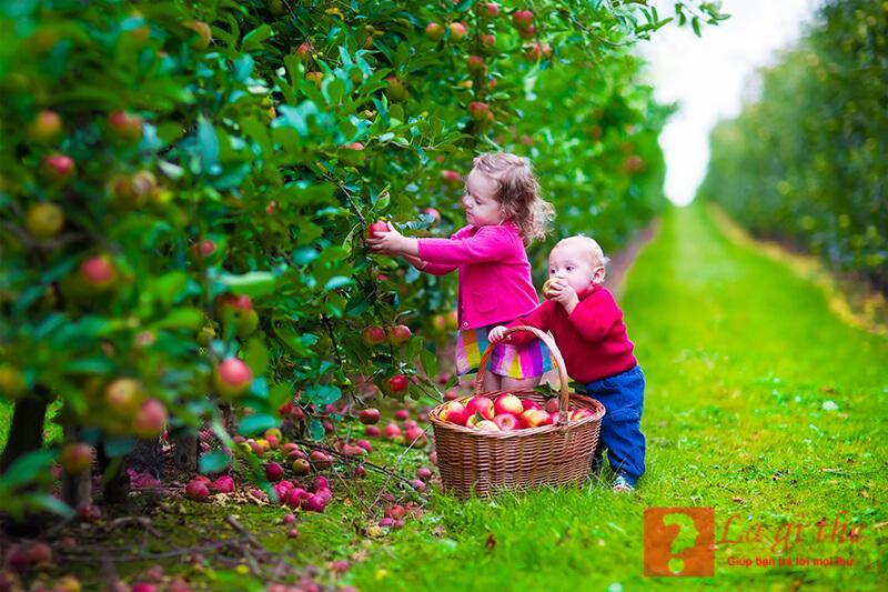 organic là thực phẩm rất an toàn với sức khỏe con người.