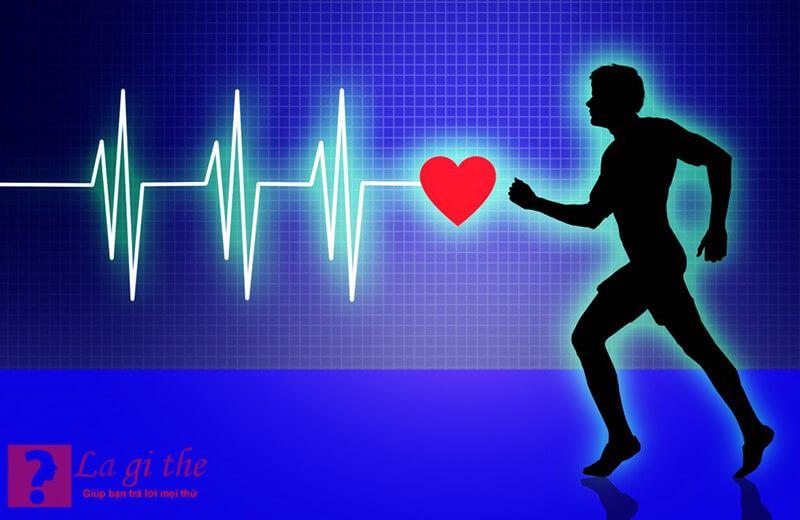 1 giáo trình tập luyện hợp lí giúp quá trình lưu thông máu ổn định