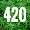 Nguồn gốc ra đời và ý nghĩa thật sự của con số 420 là gì?