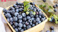 Blueberry là quả gì – Mang lại lợi ích gì cho sức khỏe