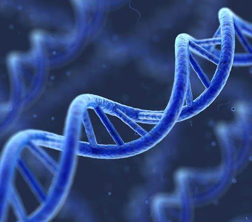 ADN tái tổ hợp là gì? Các phương pháp tạo nên ADN tái tổ hợp